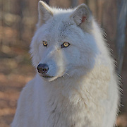 Wolf Preserve