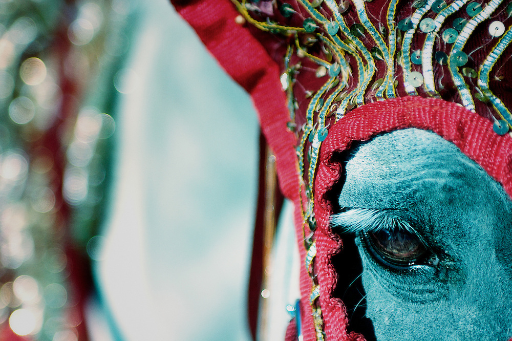 A horse is adorned with Hindu Wedding dressings.