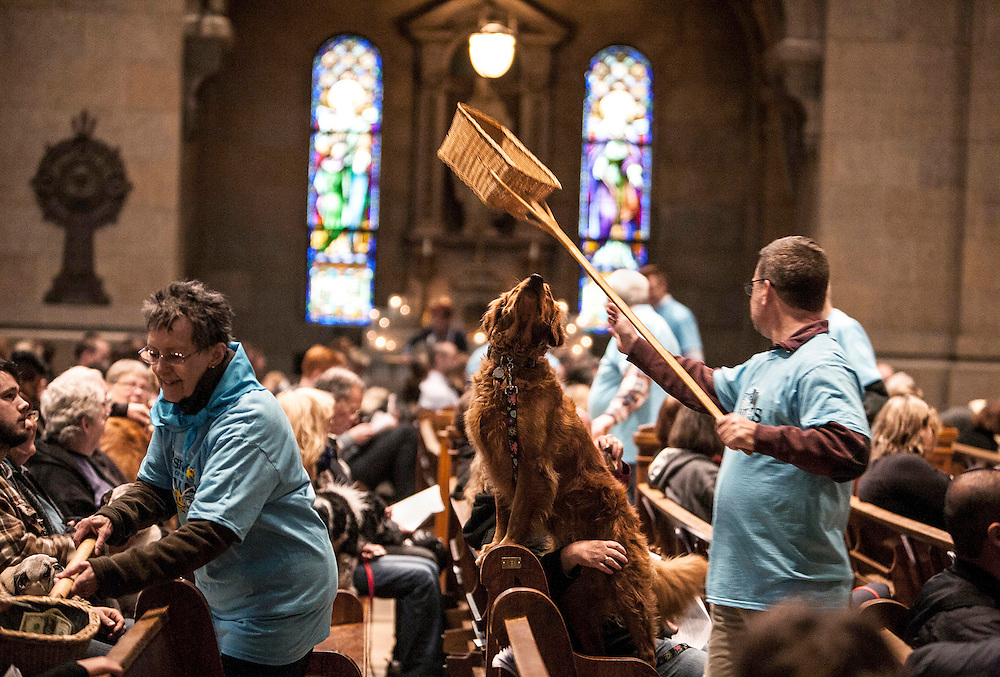 Rosie, a Golden Retriever owned by Margo Martin of Elk River, sniffs an offering basket during the Blessing of the Animals at The Basilica of Saint Mary in Minneapolis October 5, 2014.
