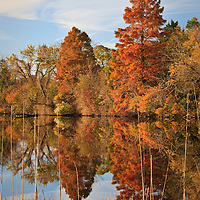 Autumn Reflections and Cattails, Little Blackwater River, Blackwater National Wildlife Refuge, Cambridge, MD