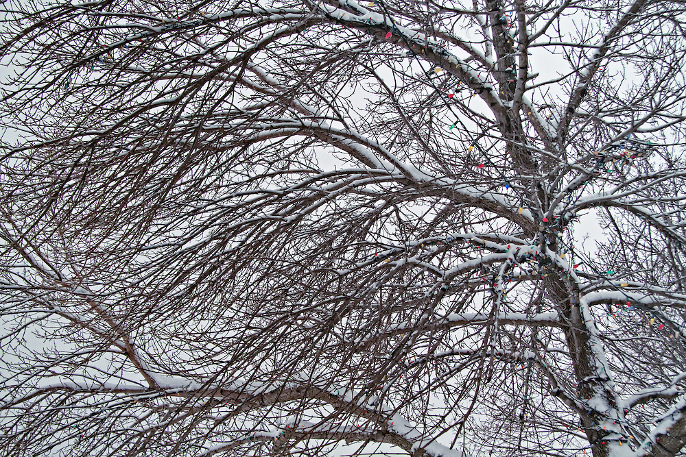 Winter Christmas lights strung on bare tree.