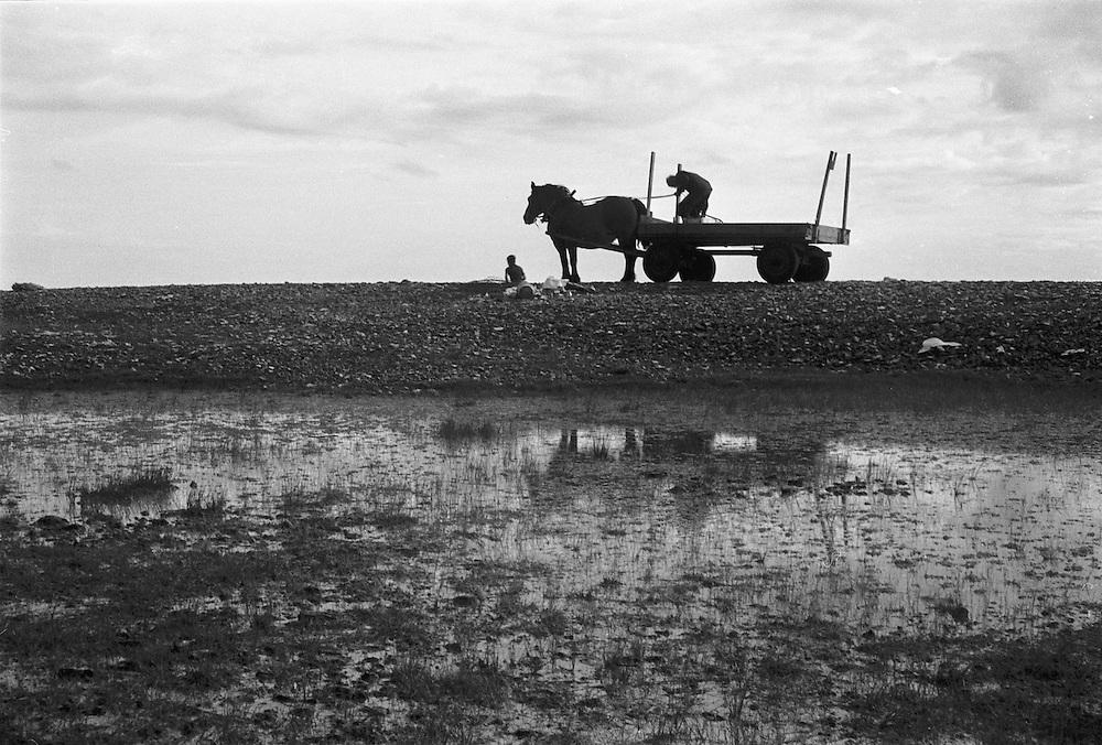 Häst och vagn vid strand och hav på Fårö