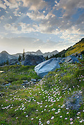 Alpine basin of Mount Rohr, in the foreground are Leafy Asters (Aster foliaceus), Coast Mountains British Columbia Canada beauty in nature