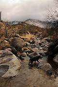 A winter storm drops snow as on the Santa Catalina Mountains, Coronado National Forest, Sonoran Desert, Catalina, Arizona, USA.