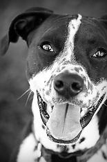 NWVS Dog Portraits