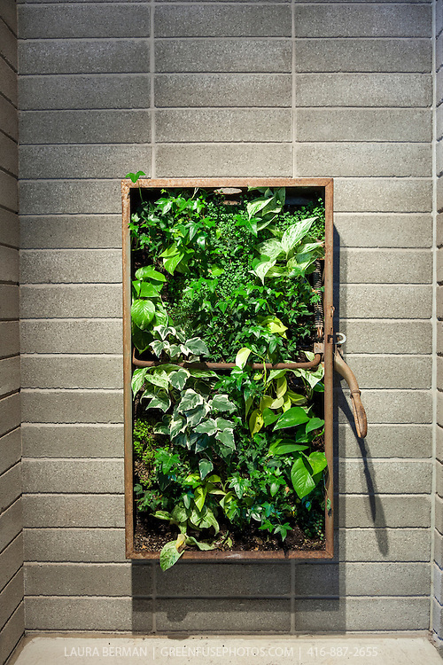 Living Wall Greenfuse Photos Garden Farm Amp Food