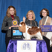 Cavalier King Charles Club of San Diego 2019