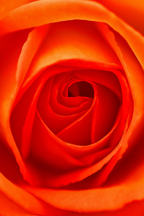 The Orange Vortex.<br />
