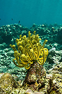Sea Lilies & Brittlestars