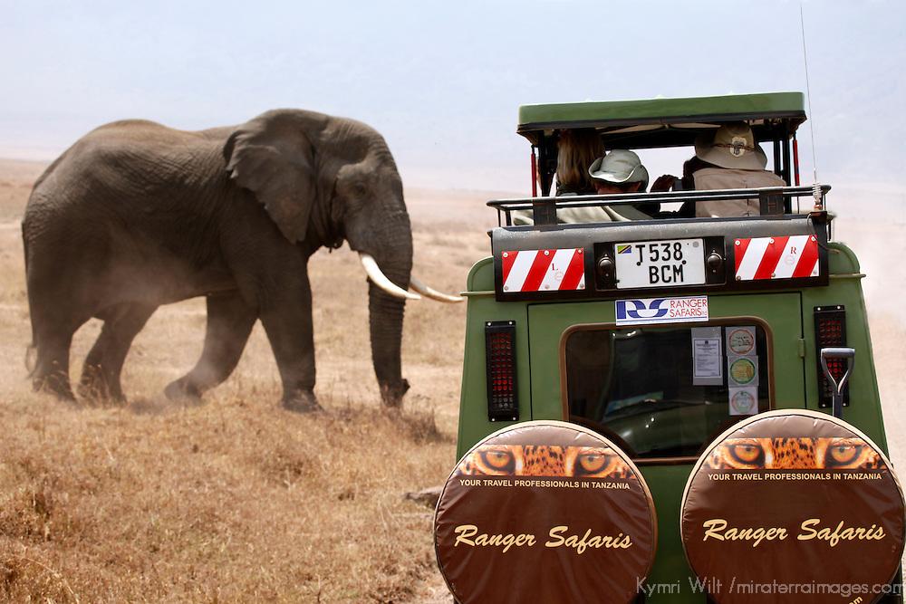 Africa, Tanzania, Serengeti. Elephant and safari jeep.