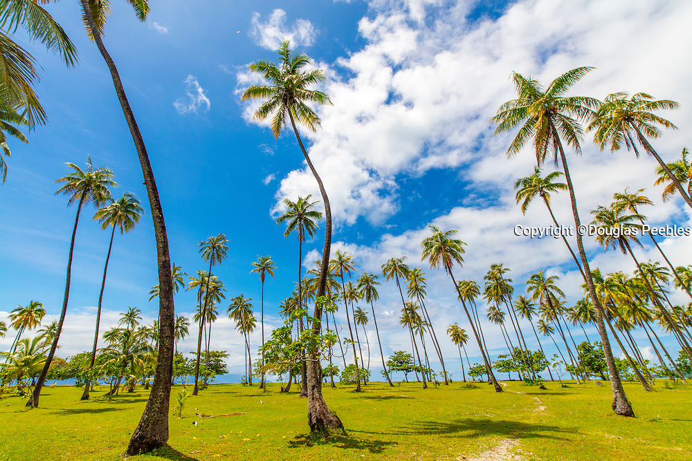 Coconut Grove, Temae, Moorea, French Polynesia