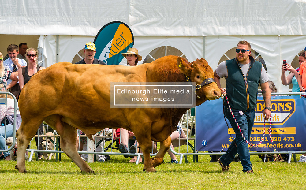 Pictured: Haddington Show. East Fortune, East Lothian, Scotland, United Kingdom, 29 June 2019. Haddington Show has taken place annually since 1804, held by the United East Lothian Agricultural Society. Traditional events include horse, sheep and pedigree cattle judging, show jumping, pig racing, a display of vintage agricultural machinery, a daredevil motorbike stunt team, and the 'Drakes of Hazard' - a collie dog rounding up Indian Runner ducks.<br /> <br /> Sally Anderson | EdinburghElitemedia.co.uk