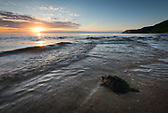 A snapping turtle makes its way out into Lake Michigan as the sun sets.