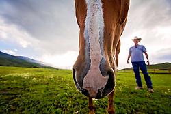 A portrait out-take...a curious horse.