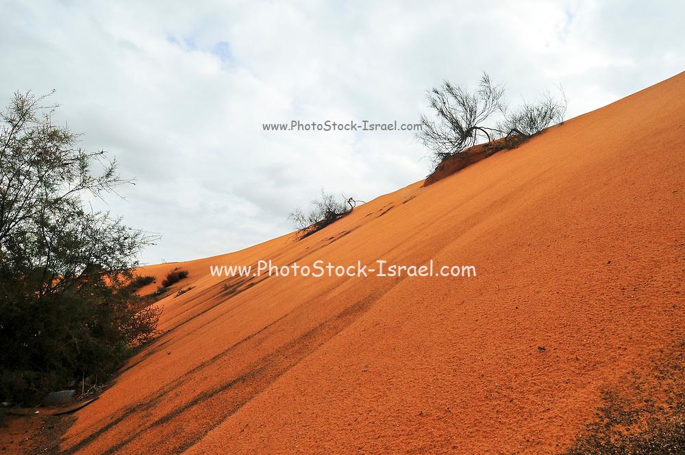 Israel, Negev Desert Sand Dune