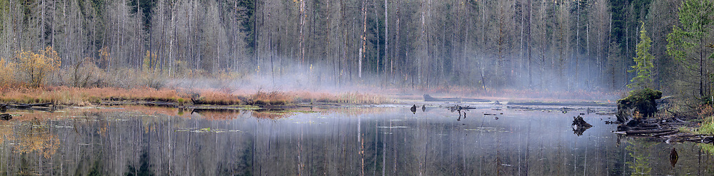 Mist over the marsh at the south end of Buntzen Lake.  Photographed from the floating bridge at the south end of Buntzen Lake near Anmore, British Columbia, Canada.