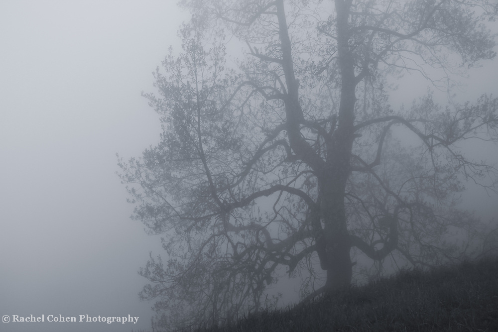 &quot;Gnarled within Clouds&quot; mono<br />