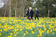 © Licensed to London News Pictures. 17/03/2014. Kew, UK People walk through the daffodils. People enjoy the occasional sunshine at Kew Gardens today 17th March 2014. Photo credit : Stephen Simpson/LNP
