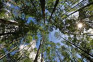 Atchafalaya Swamp Louisiana