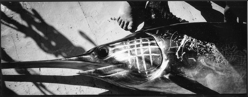 pesce spada<br /> <br /> caught swordfish