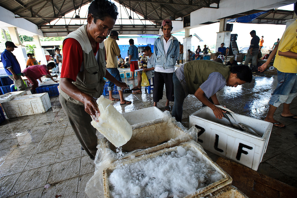 Workers in a fish market, packing fish in ice, Makassar, Sulawesi, Indonesia.