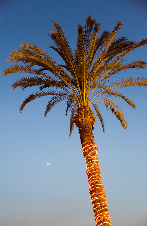 Egypt, Cairo, Low angle view of palm tree circled with glowing lights along Nile River with crescent moon at dusk