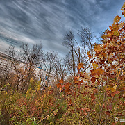 Foliage of fall 2009 on Cliff Drive near the East Bottoms, Kansas City, MO.