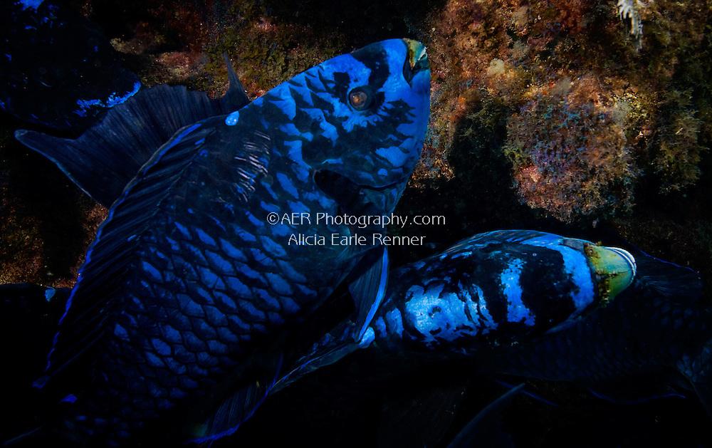 Florida Keys reef fish