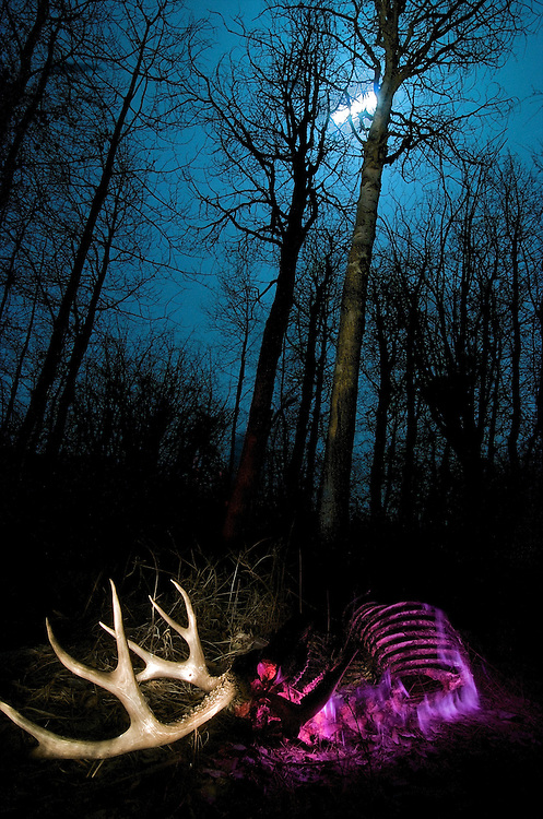 Light painting is the act of &quot;painting&quot; your subject with light sources (headlamps, flashlights, lasers) while your shutter is open. It works best when you are in a very dark environment. This image of a deer carcass and antlers was captured over a 21 minute period on a moonlit night in the Methow Valley of Washington State.<br /> This deer had been shot months before by a hunter. If you look closely you can see a bullet hole in the antler.<br /> <br /> I used pink, red, purple and white flashlights to create this image.
