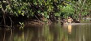 An Embera man paddles his small pirogue. Rio Sambu, Darien Province, Panama.