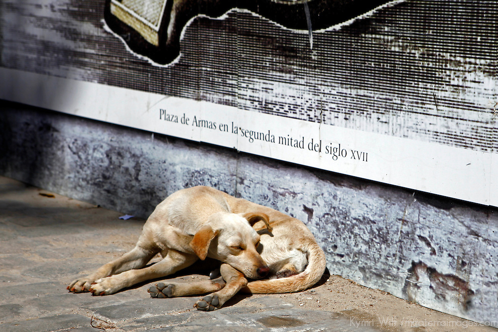 Central America, Cuba, Havana. A dog takes in the sun on an Old Havana street.