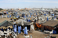 The D'El Mina small livestock market in the Mauritanian capital. In recent years, prolonged drought caused by global warming and climate change have forced many pastoral herdsmen to sell their livestock due to a lack of water and pasture resources, adversely affecting the traditional way of life of local communities.<br />