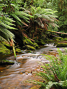 Nelson River flows by lush fern rain forest in Franklin-Gordon Wild Rivers National Park, Tasmania, Australia. Published in Mountain Travel Sobek 2009 Catalog.