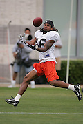 BEREA, OH - AUGUST 3:  Wide receiver Joshua Cribbs #16 of the Cleveland Browns catches a pass during training camp at the Cleveland Browns Training and Administrative Complex on August 3, 2006 in Berea, Ohio. ©Paul Anthony Spinelli *** Local Caption *** Joshua Cribbs