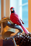 """Cardinal,"" bird carving by George Gilpin"