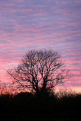 UK ENGLAND NORFOLK HINDOLVESTON 15DEC05 - Sunset and dramatic colours in the sky in rural Norfolk near the village of Hindolveston.<br /> <br /> jre/Photo by Jiri Rezac<br /> <br /> © Jiri Rezac 2005<br /> <br /> Contact: +44 (0) 7050 110 417<br /> Mobile: +44 (0) 7801 337 683<br /> Office: +44 (0) 20 8968 9635<br /> <br /> Email: jiri@jirirezac.com<br /> Web: www.jirirezac.com