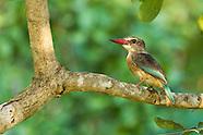 Bonamanzi Nature Reserve
