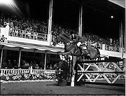 "02/08/1960<br /> 08/02/1960<br /> 02 August 1960<br /> R.D.S Horse Show Dublin (Tuesday). David Broome, Great Britain, on ""Sunsalve"" at the Dublin Horse Show."