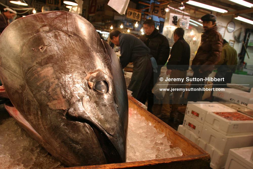 Tuna meat and a Tuna head, on sale at Tuskiji fish and seafood wholesale market.