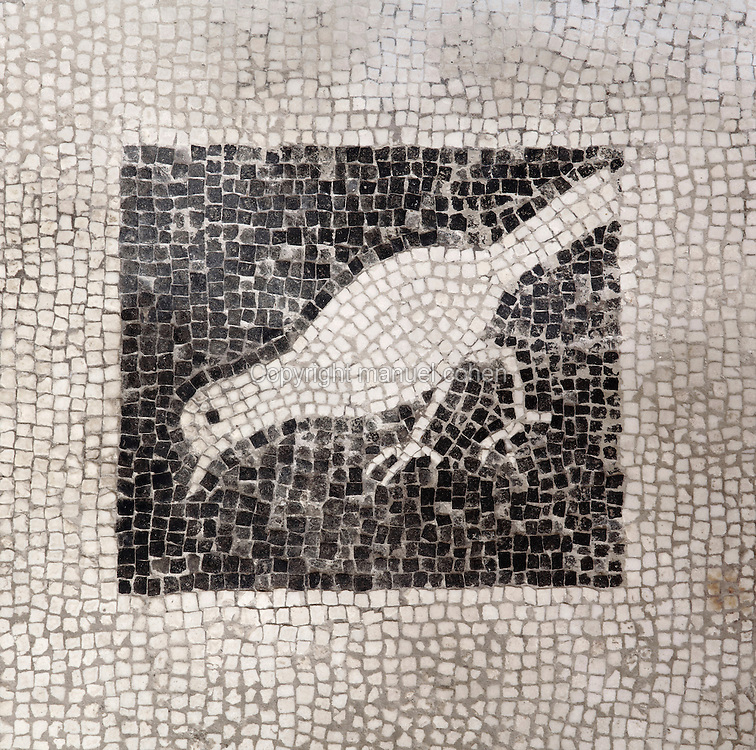 White bird on a black background, 1st century AD, detail of the mosaic floor of the atrium of the Casa di Paquio Proculo, or House of Paquius Proculus, Pompeii, Italy. Pompeii is a Roman town which was destroyed and buried under 4-6 m of volcanic ash in the eruption of Mount Vesuvius in 79 AD. Buildings and artefacts were preserved in the ash and have been excavated and restored. Pompeii is listed as a UNESCO World Heritage Site. Picture by Manuel Cohen
