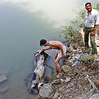 Iraqi's recover a body from the Tigris River in central Baghdad. At least 50 corpses were discovered scattered around Baghdad overnight, police said. October 2006.