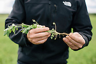 Agrovista UK agronomist Chris Martin discussing cover crops on farm at Stannington, Northumberland for Jane Craigie.