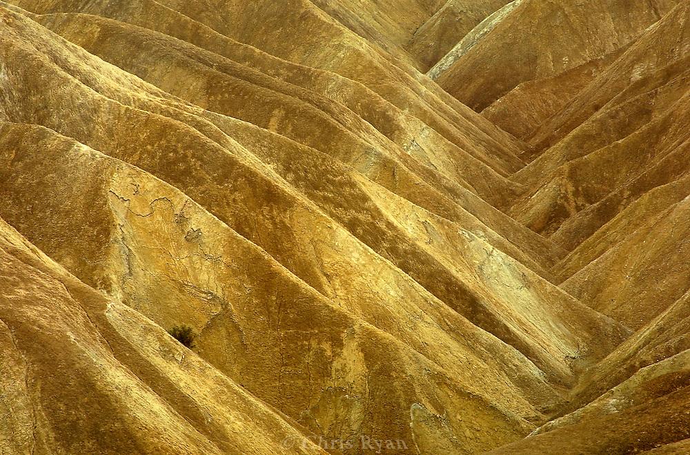 Lone shrub near Zabriskie Point, Death Valley