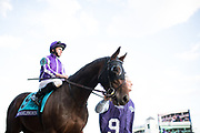 November 3, 2018: Breeders' Cup Horse Racing World Championships. Mendelssohn and Ryan Moore head to the gate in the Breeders' Cup Classic.