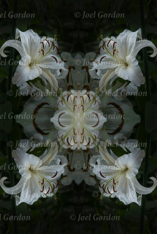 Photographic series of digital  Lily computer art.<br />