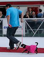 2月9日,在美国洛杉矶,为迎接节日到来,举办冰上節日狗狗服装造型比赛。一名狗主人跟他的狗走在冰上红地毯比赛。(新华社发 赵汉荣摄)<br /> A dog owner walks with his pet with costume in a red carpet strut across the ice rink during a holiday costume contest in Los Angeles, he United States, on Wednesday, December 9, 2015.   (Xinhua/Zhao Hanrong)(Photo by Ringo Chiu/PHOTOFORMULA.com)<br /> <br /> Usage Notes: This content is intended for editorial use only. For other uses, additional clearances may be required.