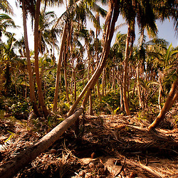 Coconut Trees at Devil's Beach, Turtle Island, Yasawa Islands, Fiji