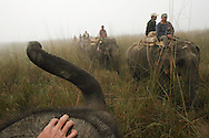 MEGHAULY, NEPAL - DECEMBER 02, 2005: Mahouts (Nepali elephant handlers) ride their elephants from camp to the playing field in the early morning in preparation for the 24th World Elephant Polo Championships December 02, 2005 in the Royal Chitwan National Park, Nepal. The tournament is part of &quot;The Chivas Life Series&quot; which is a series of inspiring events in extraordinary places. (Photo by Amy Toensing/Getty Images) _________________________________<br />
