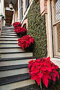 Christmas poinsettias decorate a historic home in Savannah, GA.