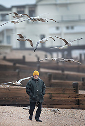 © Licensed to London News Pictures. 08/02/2019. Bognor Regis, UK. A man is surrounded by gulls as winds pick up on the beach at Bognor Regis as the effects of Storm Erik are felt in the south of the UK. Photo credit: Peter Macdiarmid/LNP